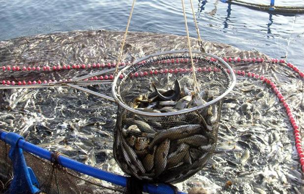 El futuro de la pesca y la acuicultura